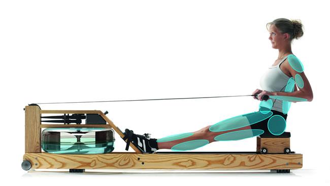 WaterRower trainierte Muskeln